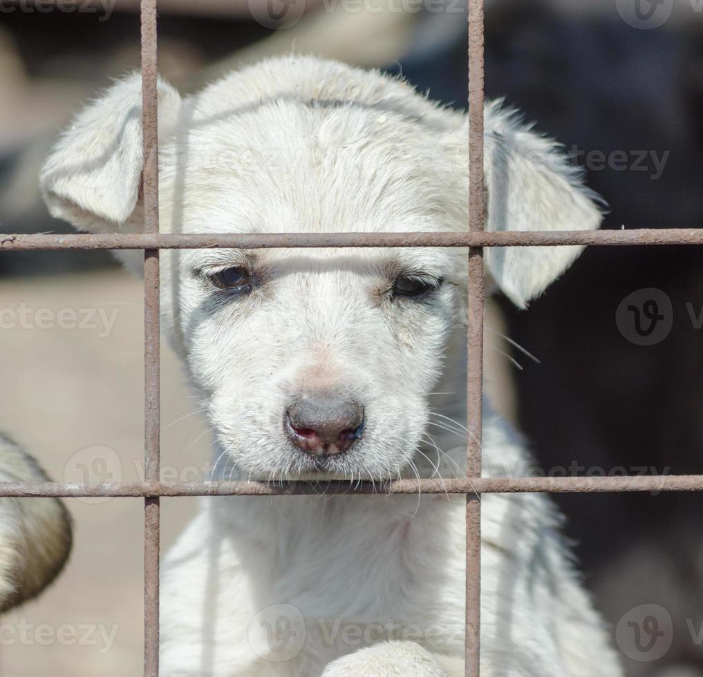 ledsen vit valp bakom ett staket foto