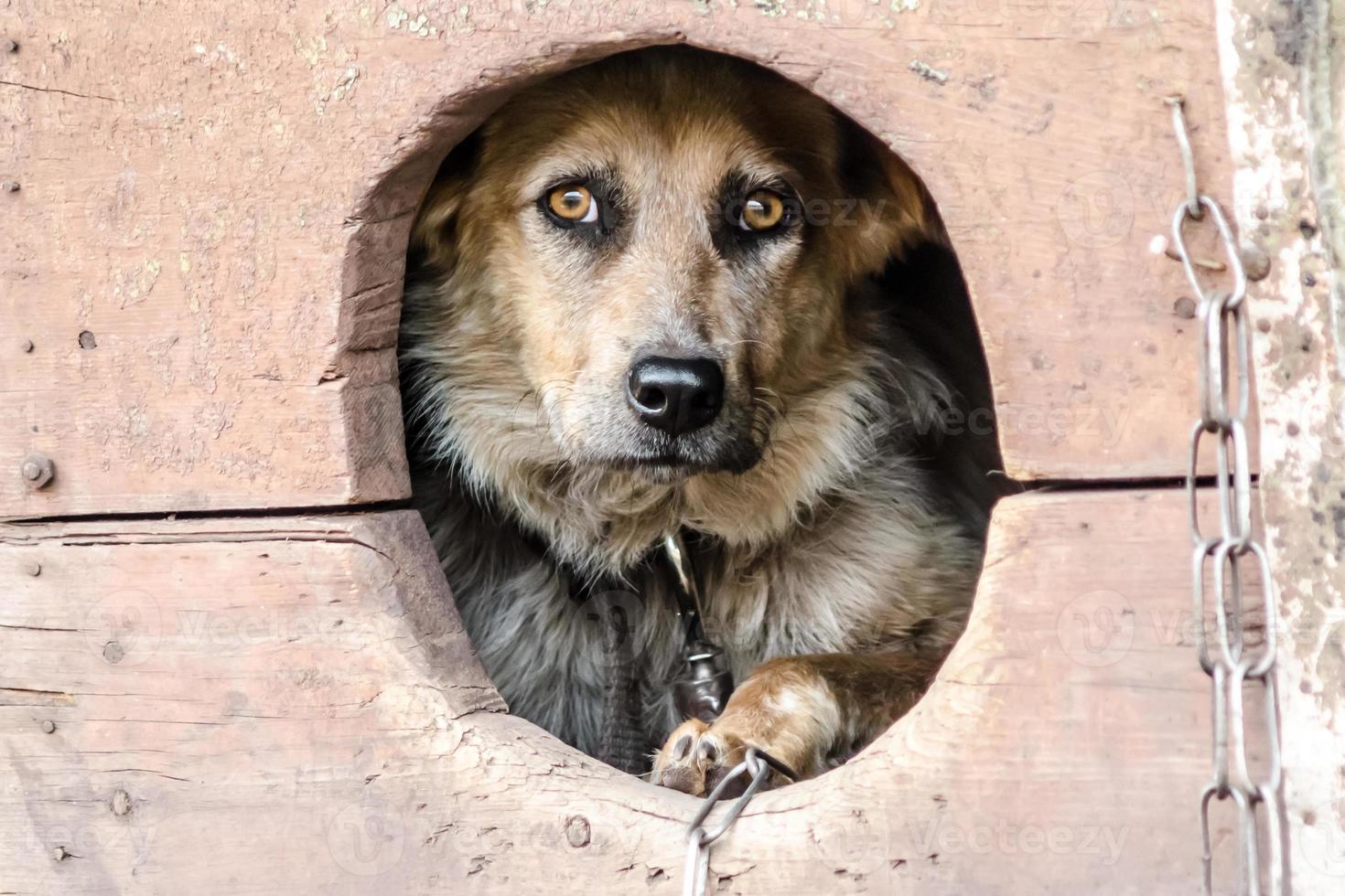 olycklig hund i ett hundhus foto