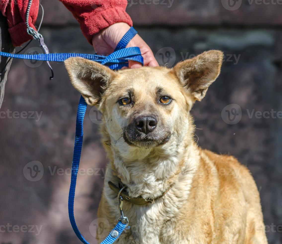 brun hund med ägaren foto