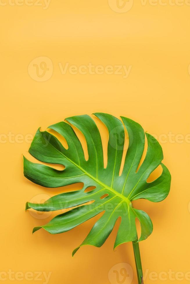 monstera leafs låg på orange bakgrund. sommar bakgrund koncept. foto