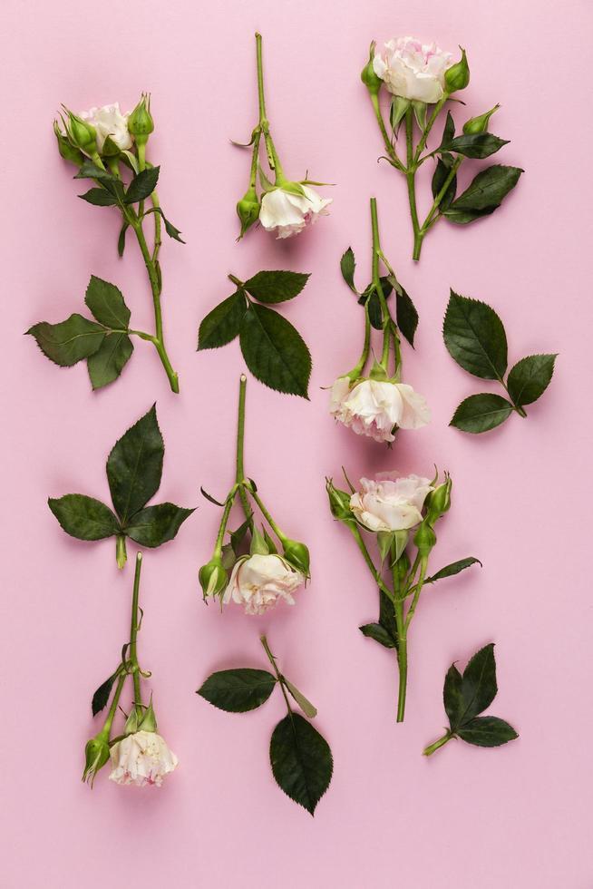 platt låg blommor på rosa bakgrund foto