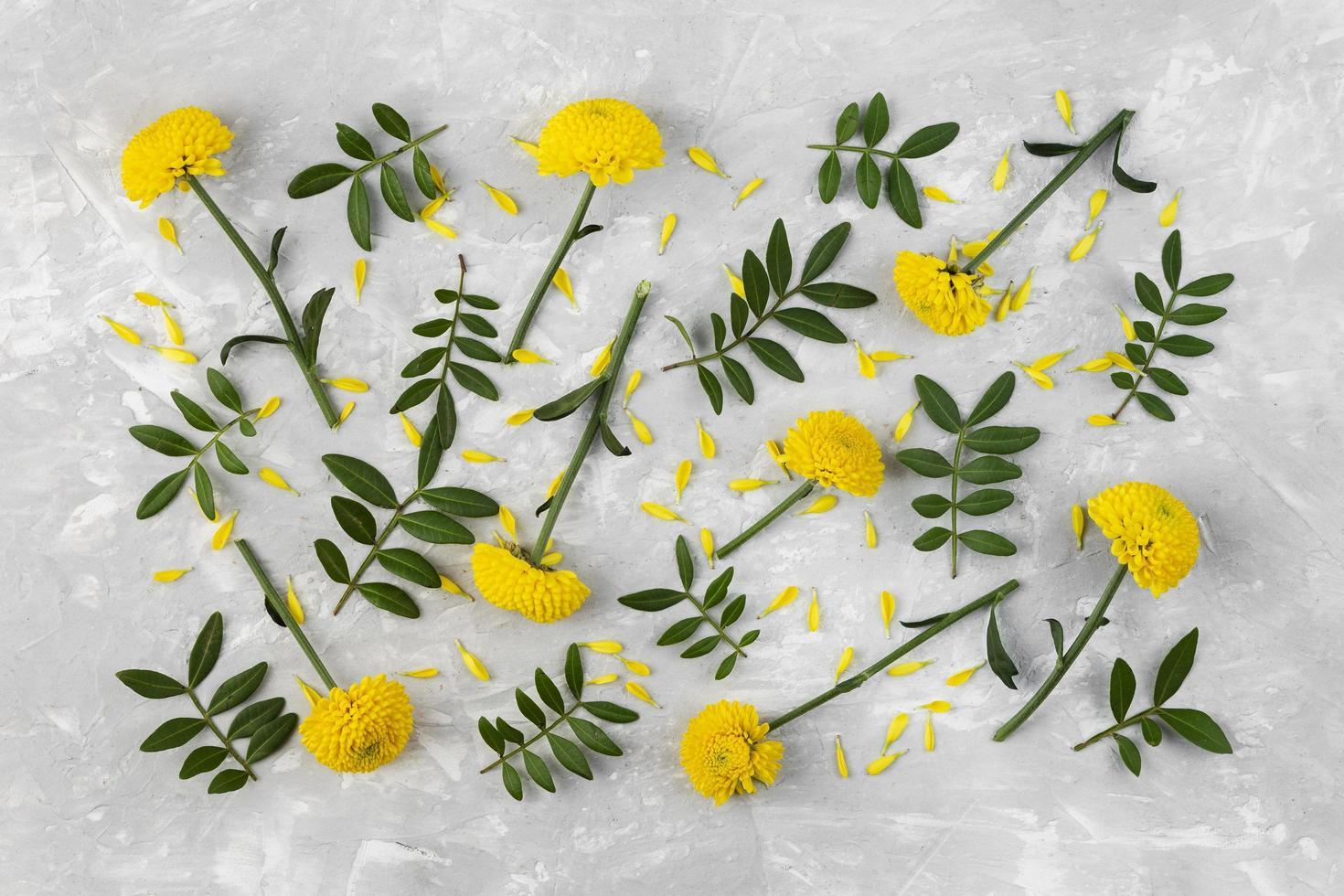 gul blomma platt låg foto