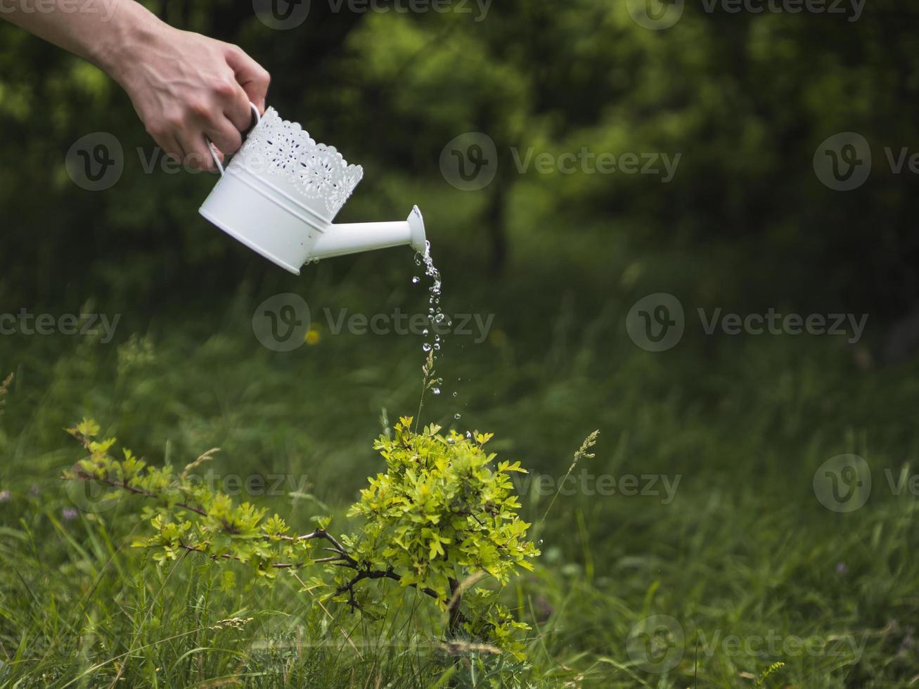 handvattenväxt från vit vattenkanna foto