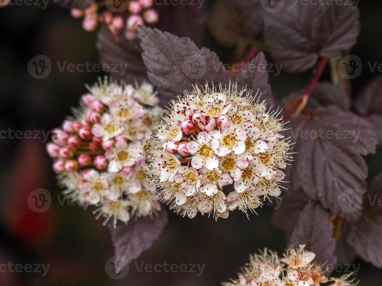 Nineba blommor i en trädgård foto