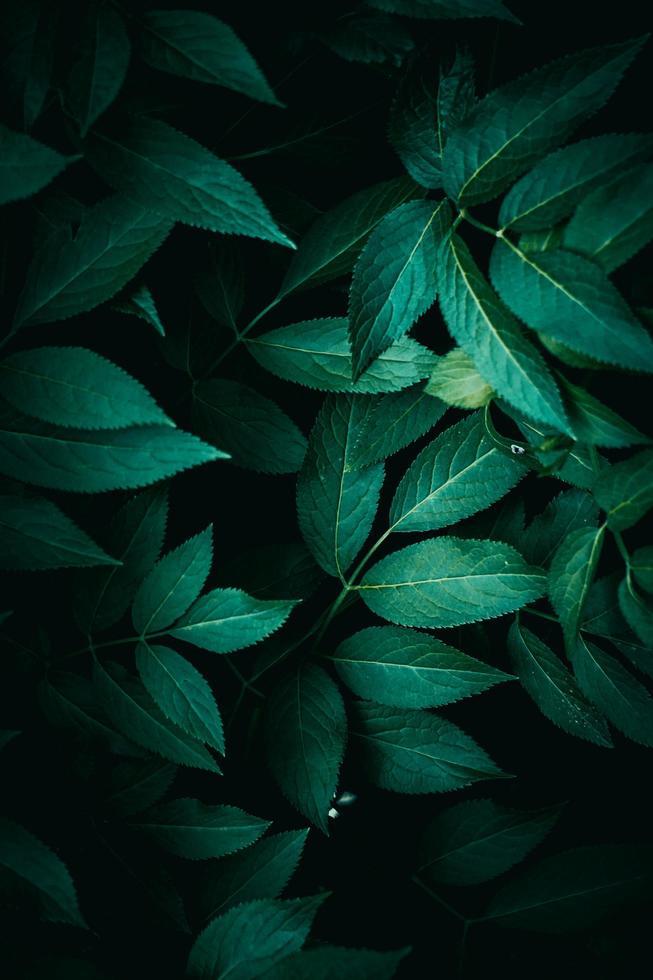 gröna växtsidor under vårsäsongen, grön bakgrund foto