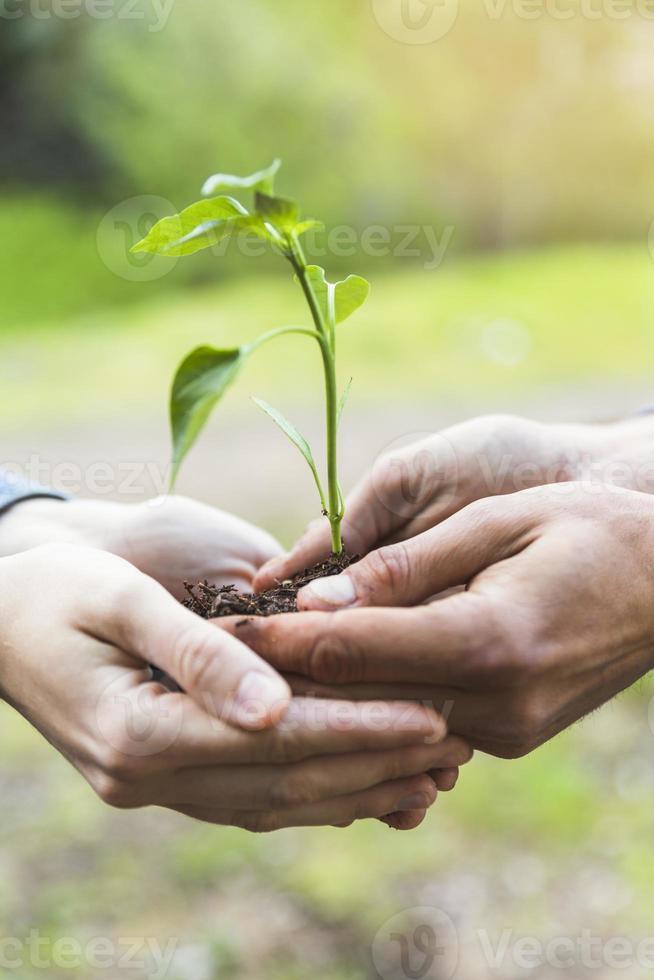beskurna händer som håller plantor i naturen foto