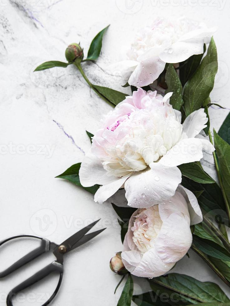 pion blommor på en marmor bakgrund foto