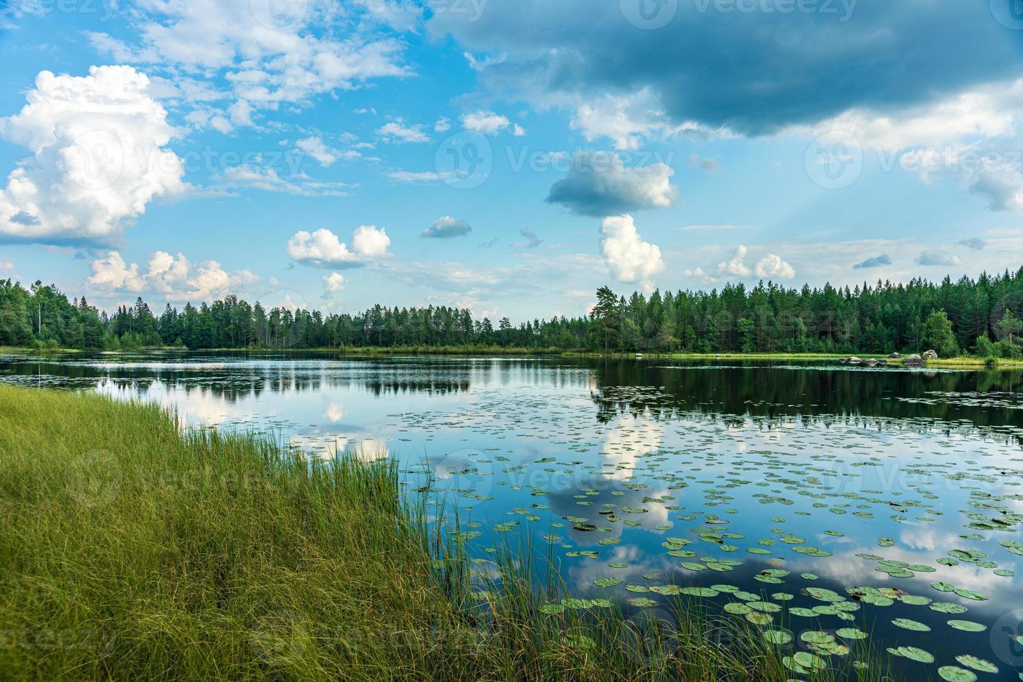 sommarsikt över en liten sjö på den svenska landsbygden foto