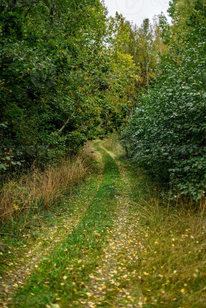stig i en grön skog foto