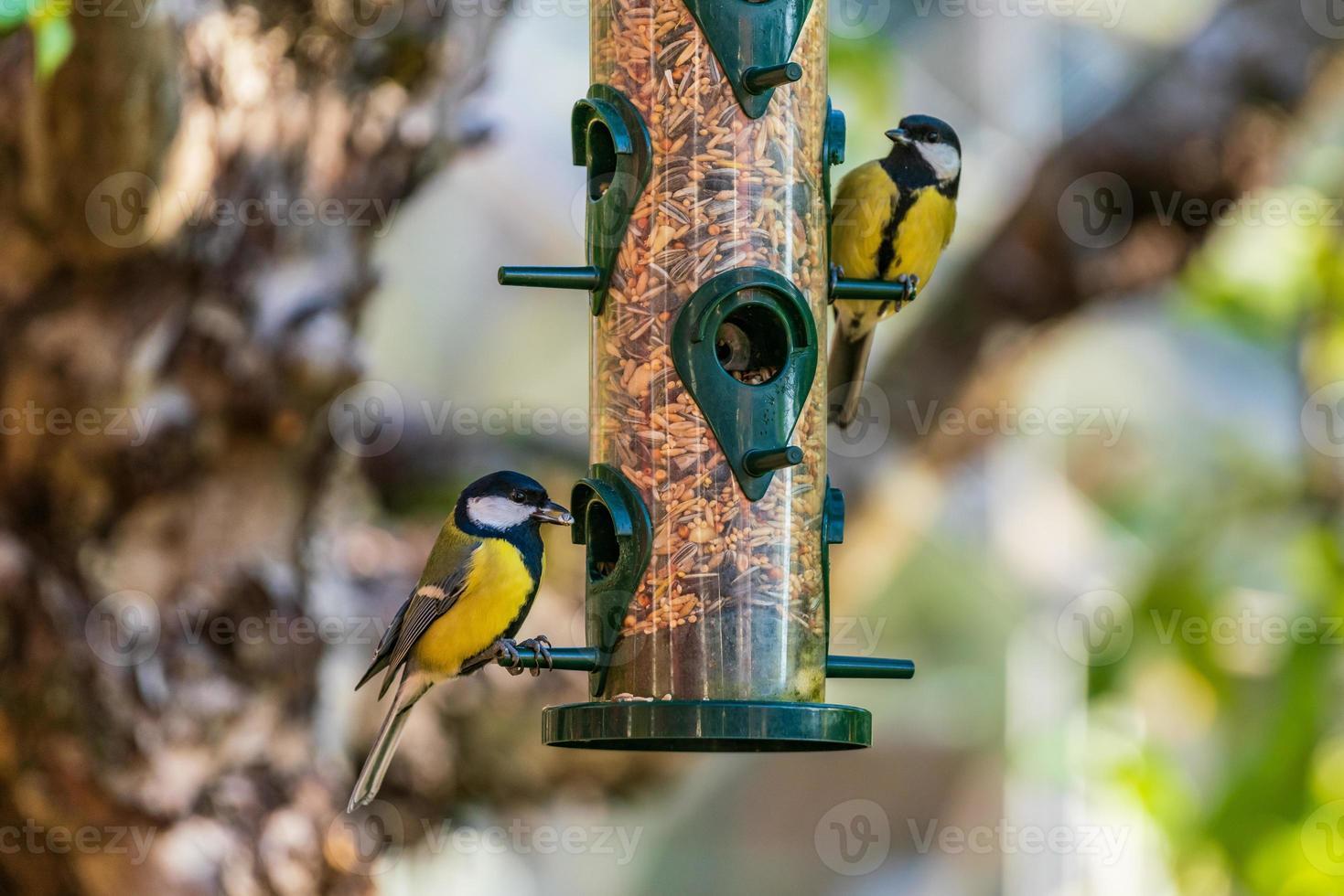 par fågelfåglar som äter från en fågelmatare foto