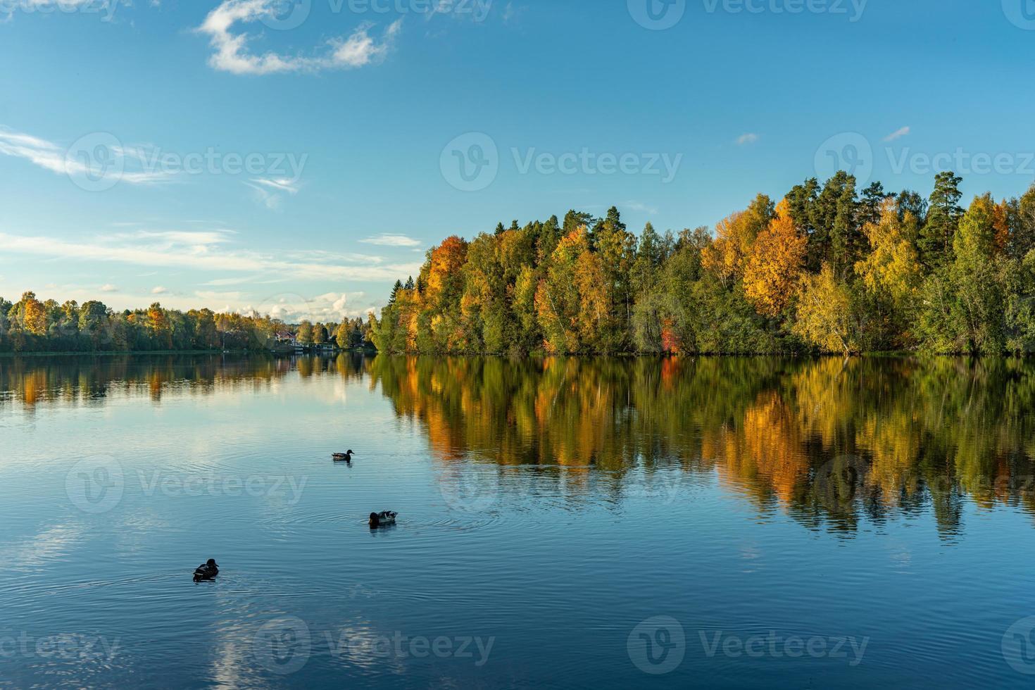 färgglada höstträd med änder i vattnet foto