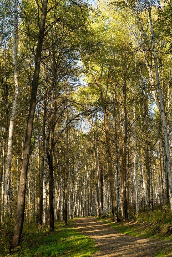 naturlandskap med utsikt över träd och en stig i lunden. foto