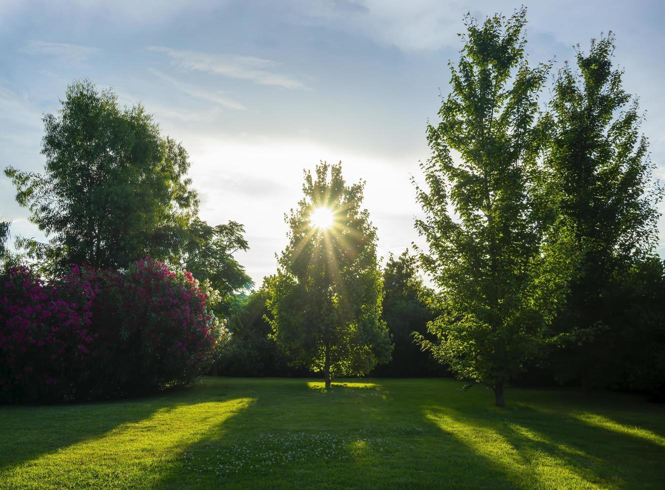 naturlandskap med utsikt över en vacker park och träd foto