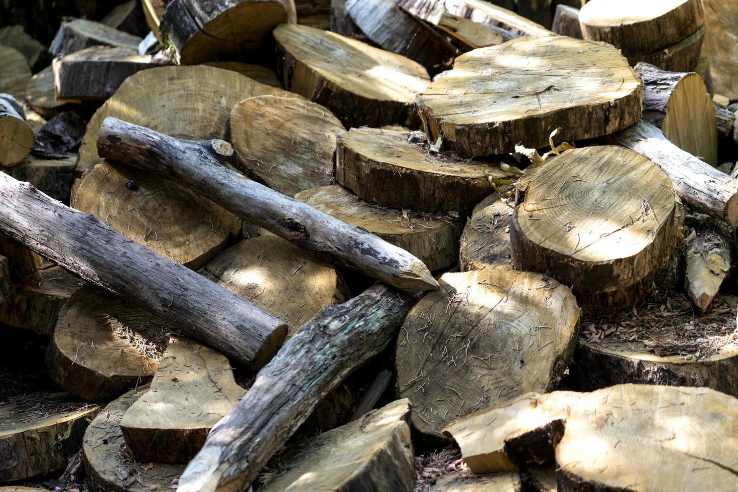 naturlig bakgrund med klippta trädskivor foto