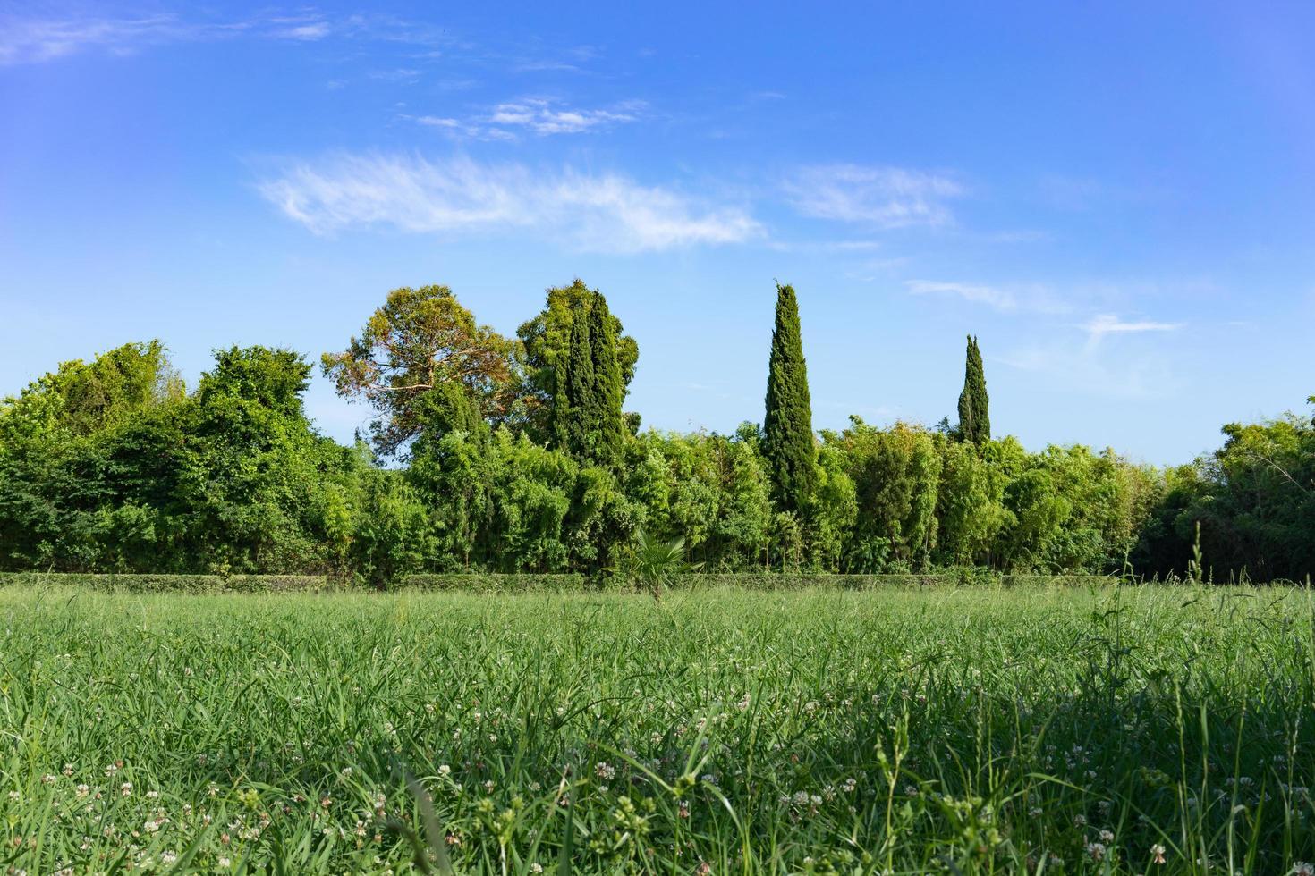 naturlandskap med grön troway och träd foto