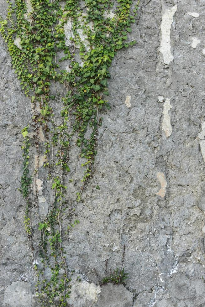 vertikal bakgrund med konsistens av ett grått gips. foto