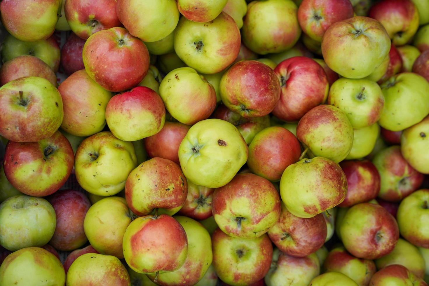 naturlig bakgrund med rödgröna äpplen foto