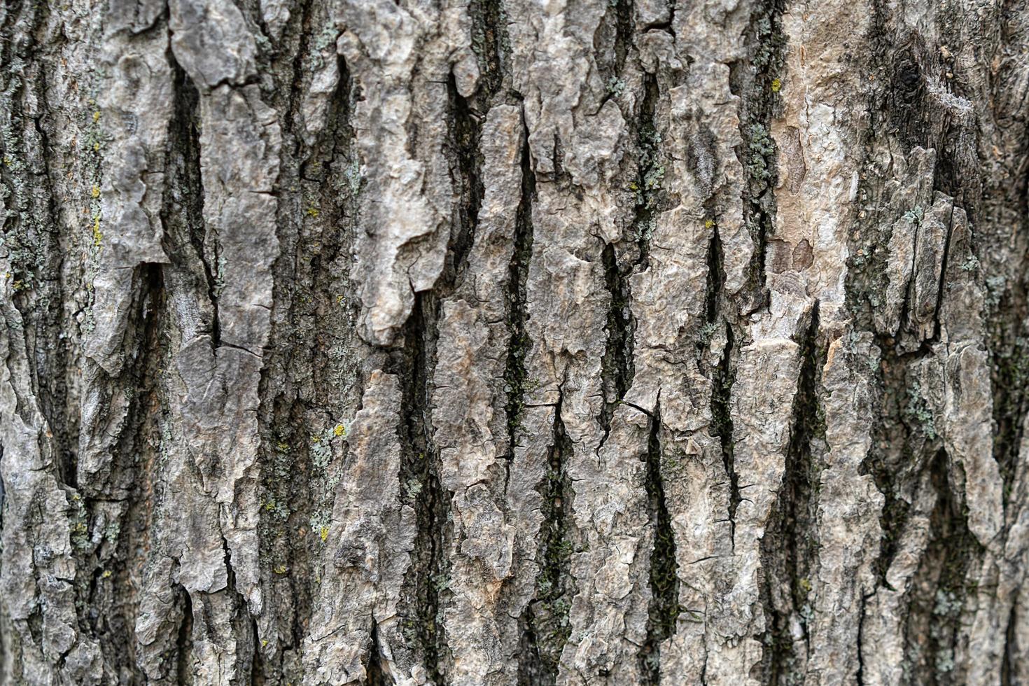 naturlig bakgrund med trädbarkstruktur. foto