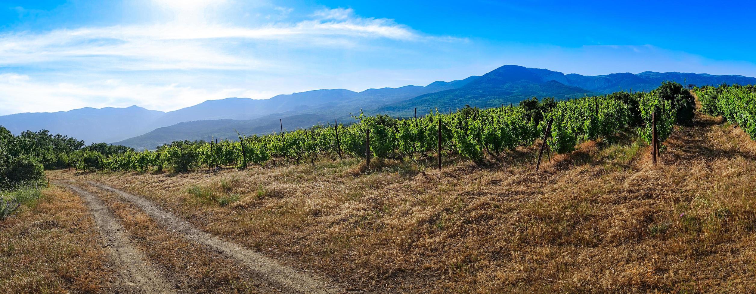 panorama över det naturliga landskapet med vägen. foto