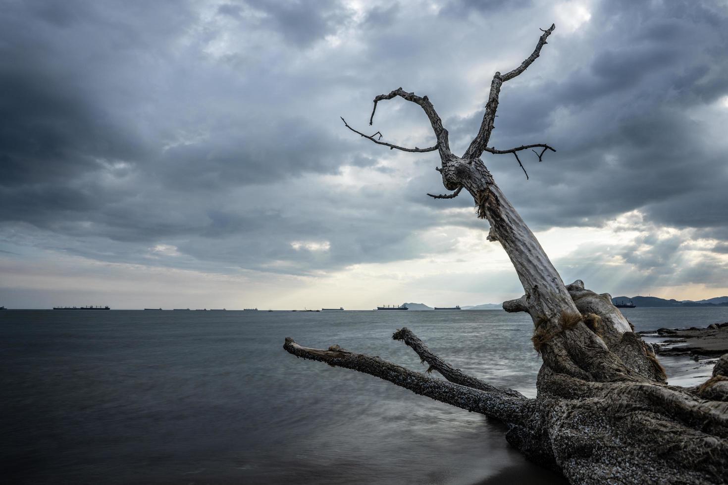 stammen av ett torrt träd på bakgrunden av havslandskapet foto
