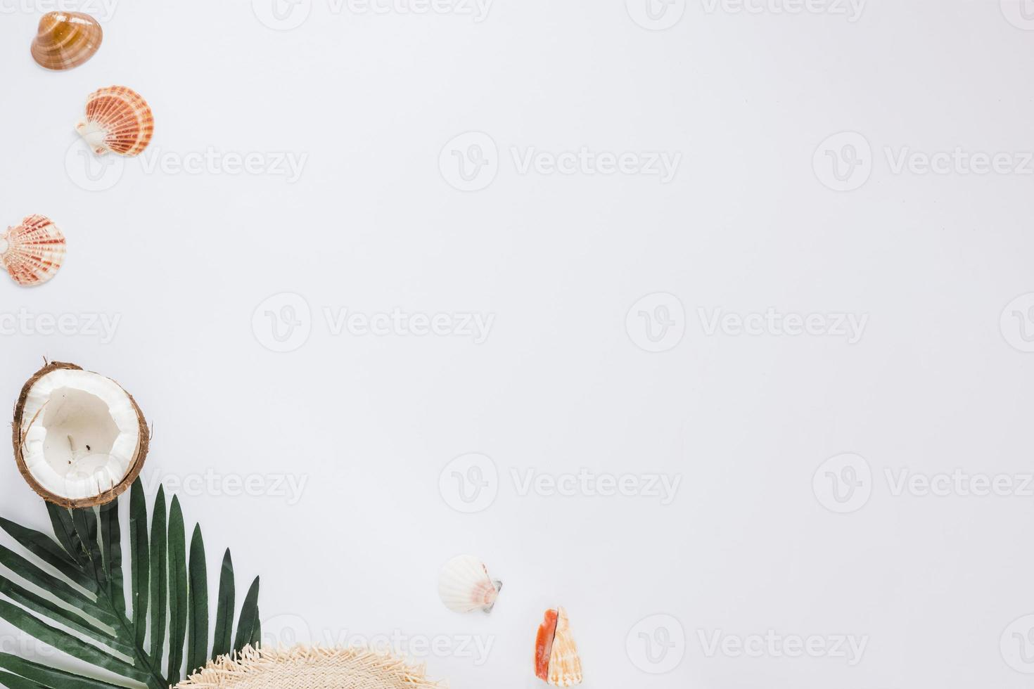 snäckskal med grönt blad och kokosnöt foto