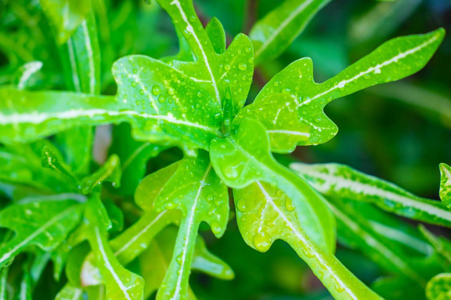 vattendroppar på bladen under regnperioden foto