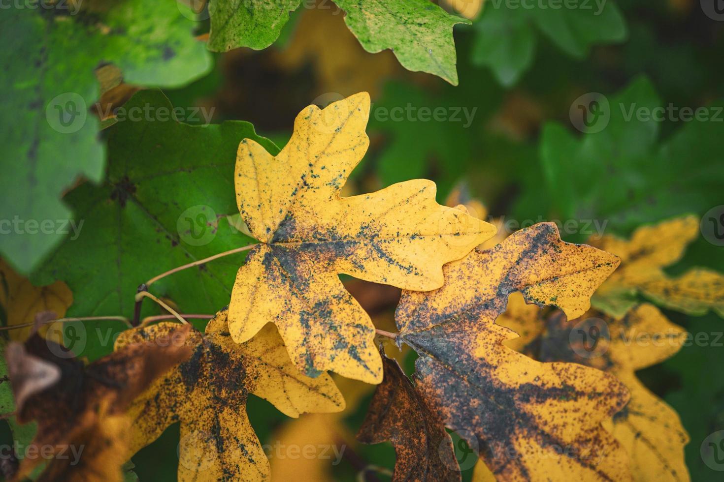 gula trädblad under höstsäsongen foto