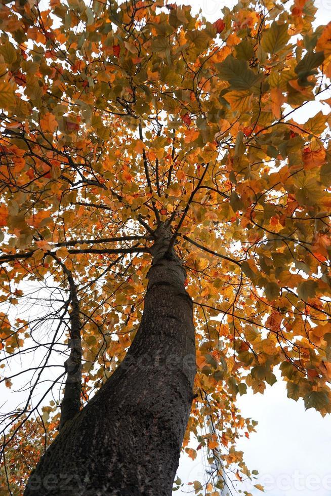 träd med röda och bruna löv under höstsäsongen foto