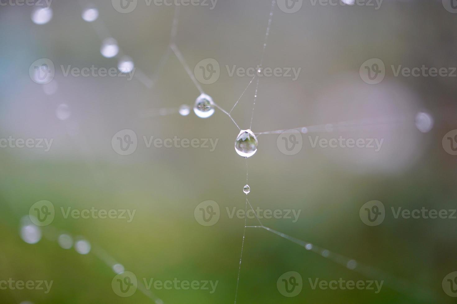 droppar på spindelnätet under regniga dagar foto