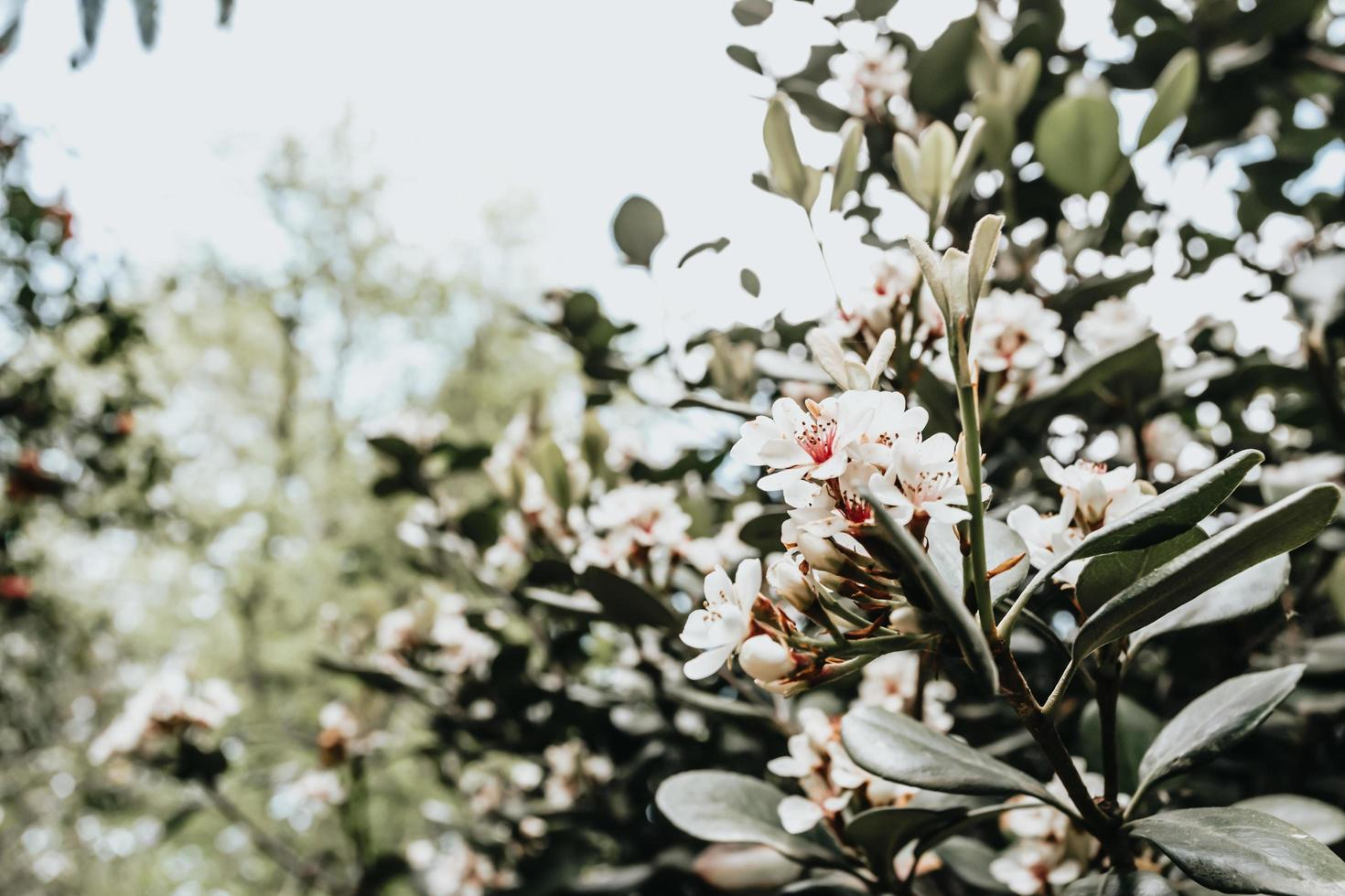 en vit blomma som blommar under en ljus dag foto