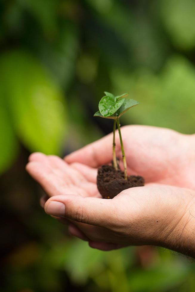 bild av manliga händer som transplanterar unga växter foto