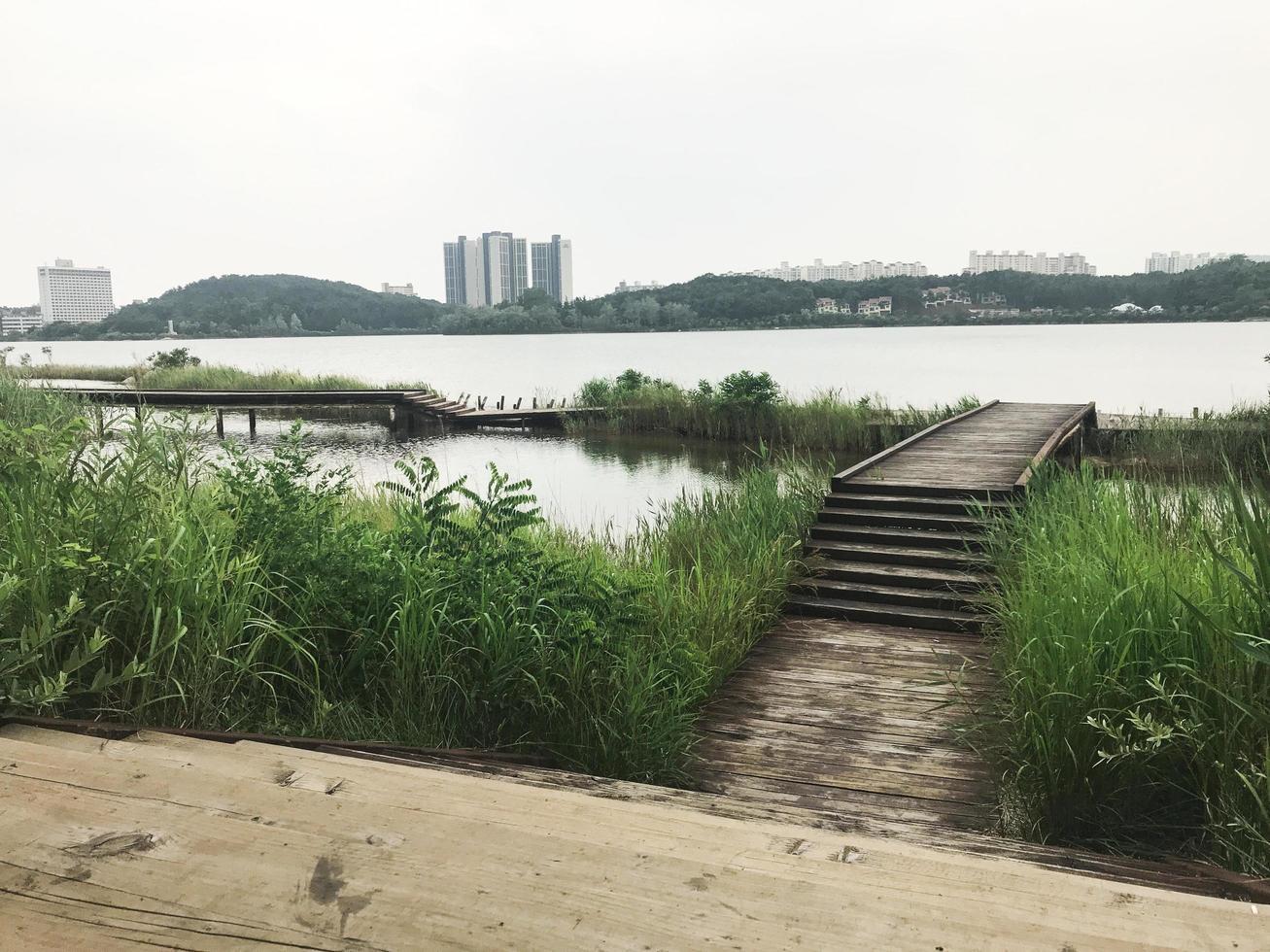 träbryggan bevuxen med vass vid sjön Sokcho City, Sydkorea foto