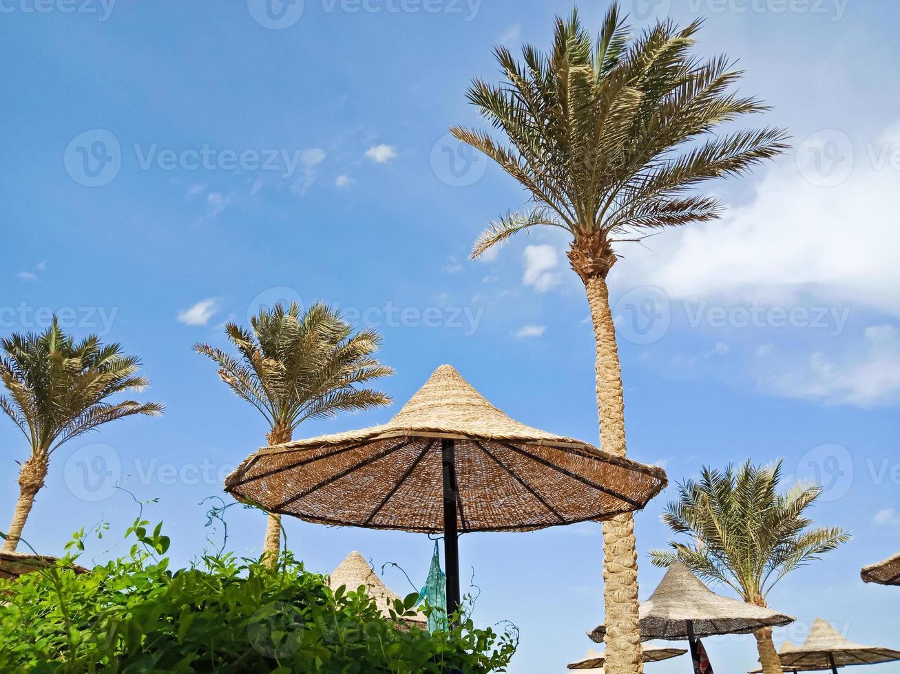 halmparaply och höga palmer i Hurghada, Egypten foto