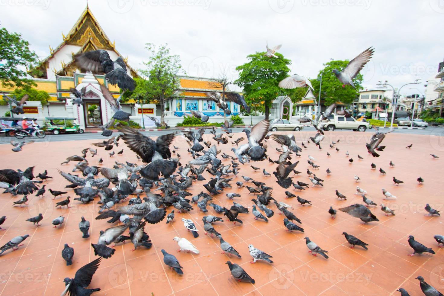 flock duvor på marken foto