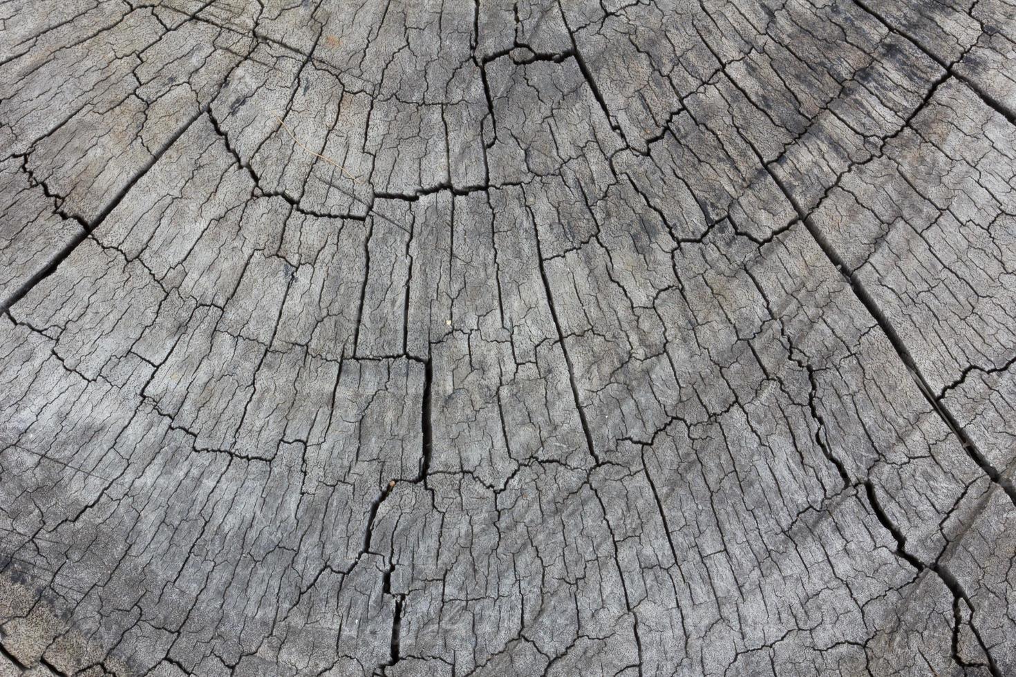 grå struktur av stubbe foto