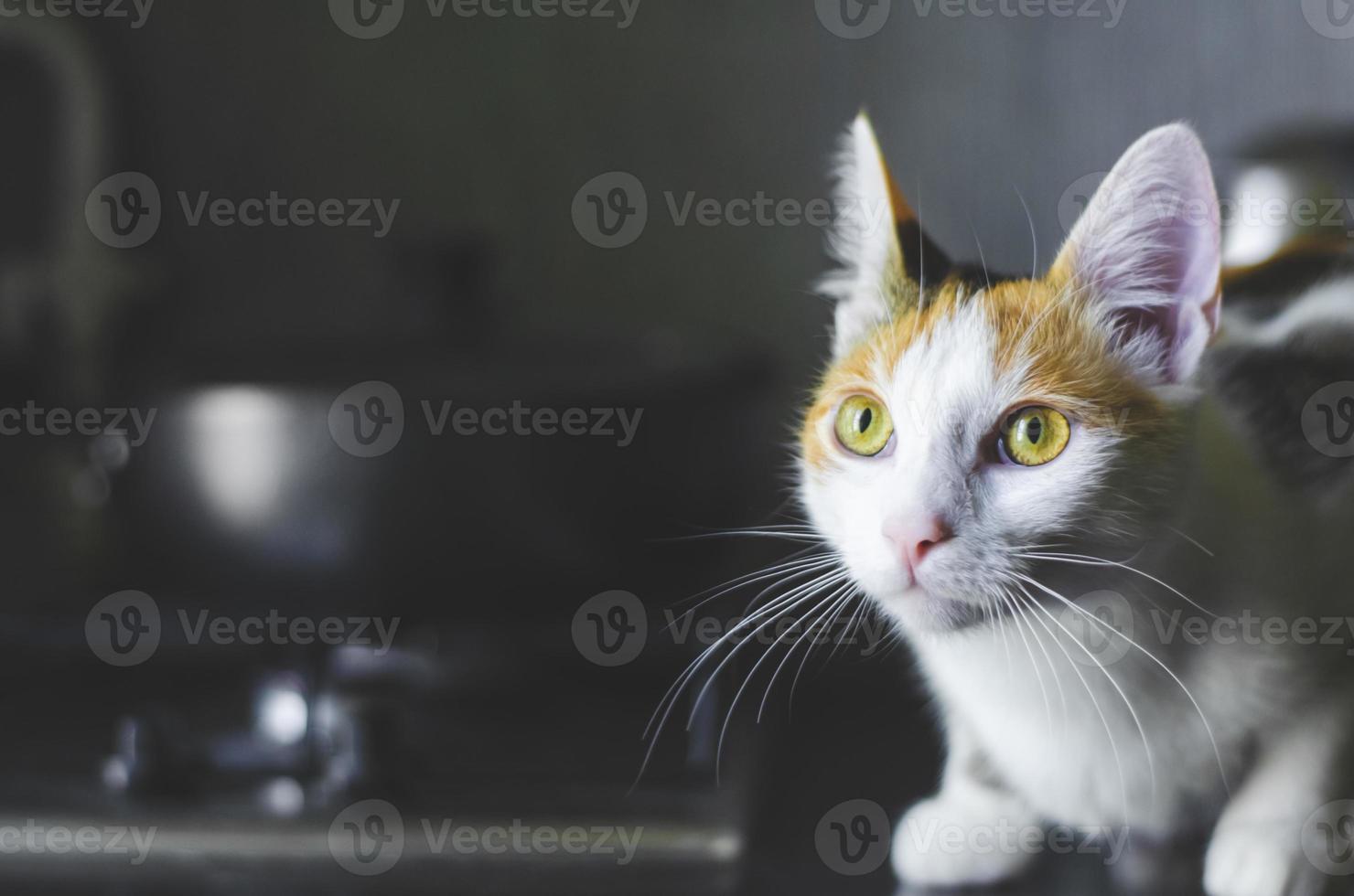 hem tricolor katt sitter på köksytan. foto