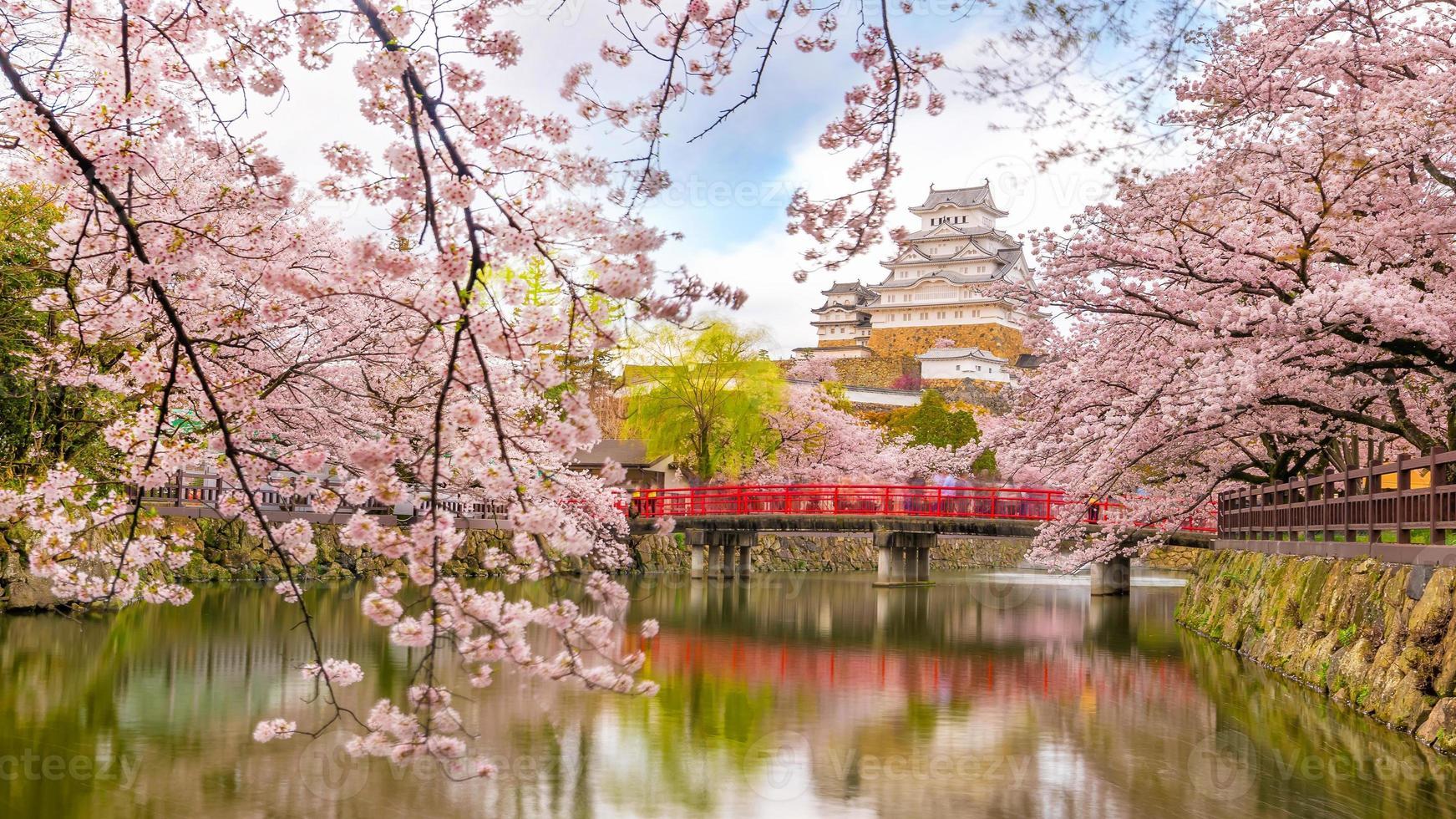 himeji slott med sakura körsbärsblommasäsong foto