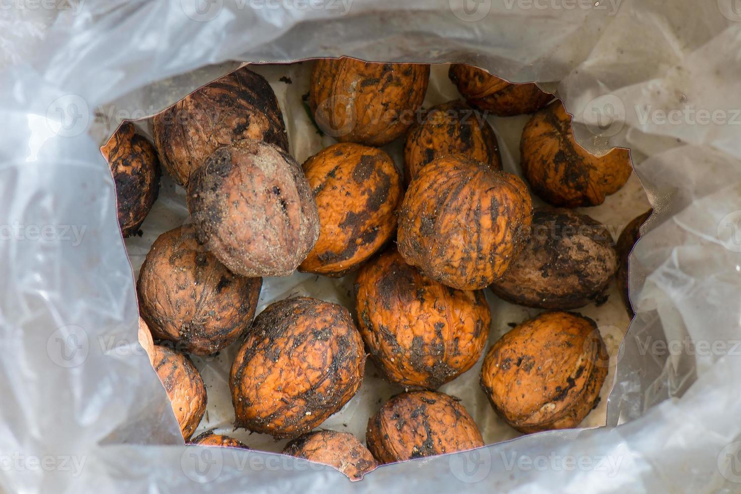 valnötter till noll kilometer ekent samlat foto
