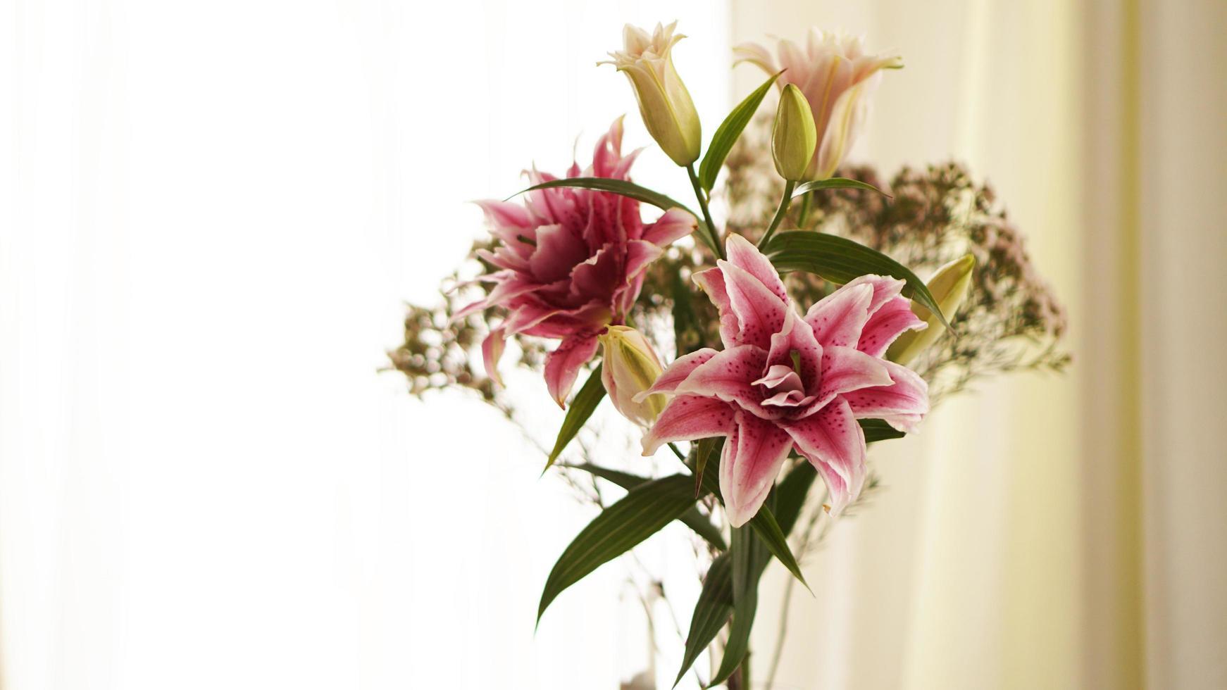 närbild av en rosa färsk lilja som blommar på sommaren foto