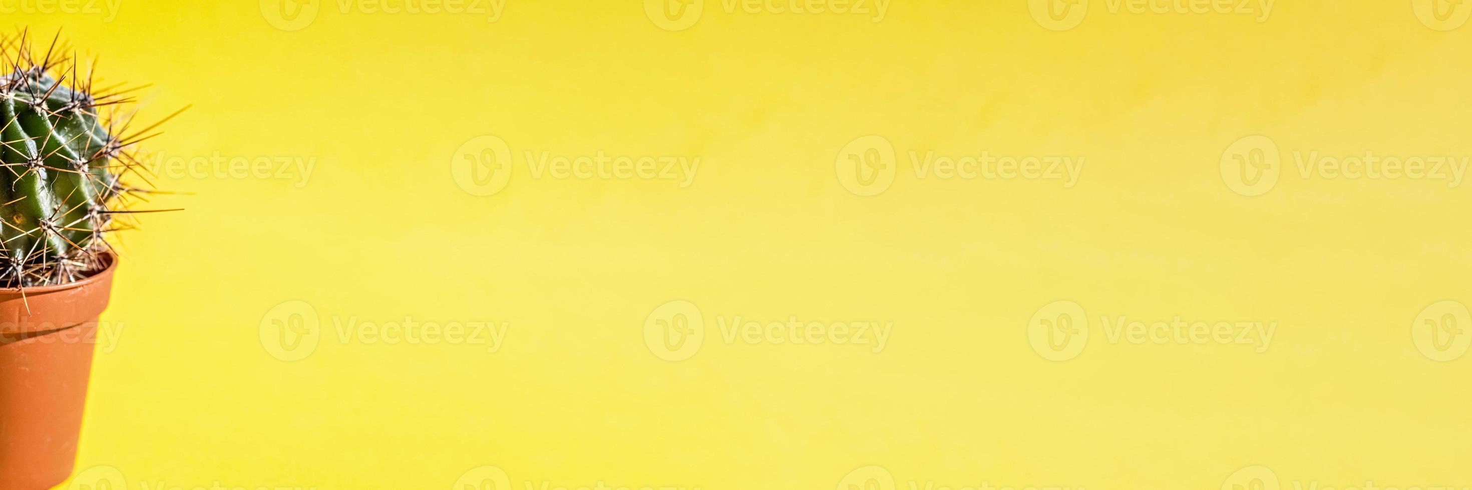 del av en kaktusväxt i en blomkruka på en gul bakgrund. banner foto