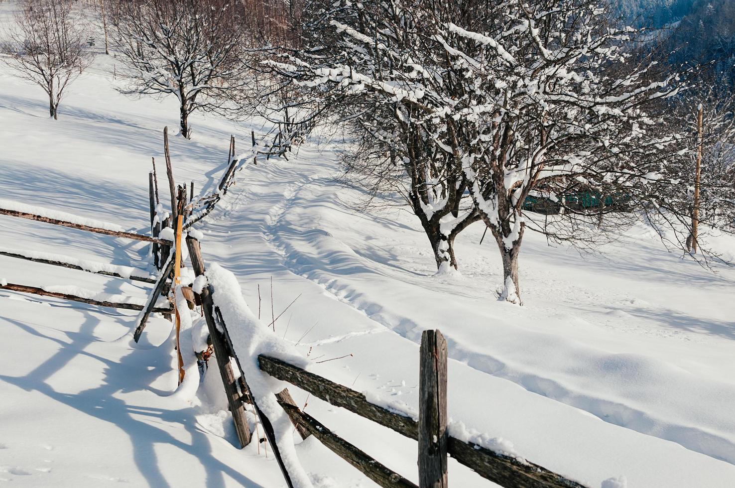 snötäckt staket landsbygd vintersoligt landskap foto