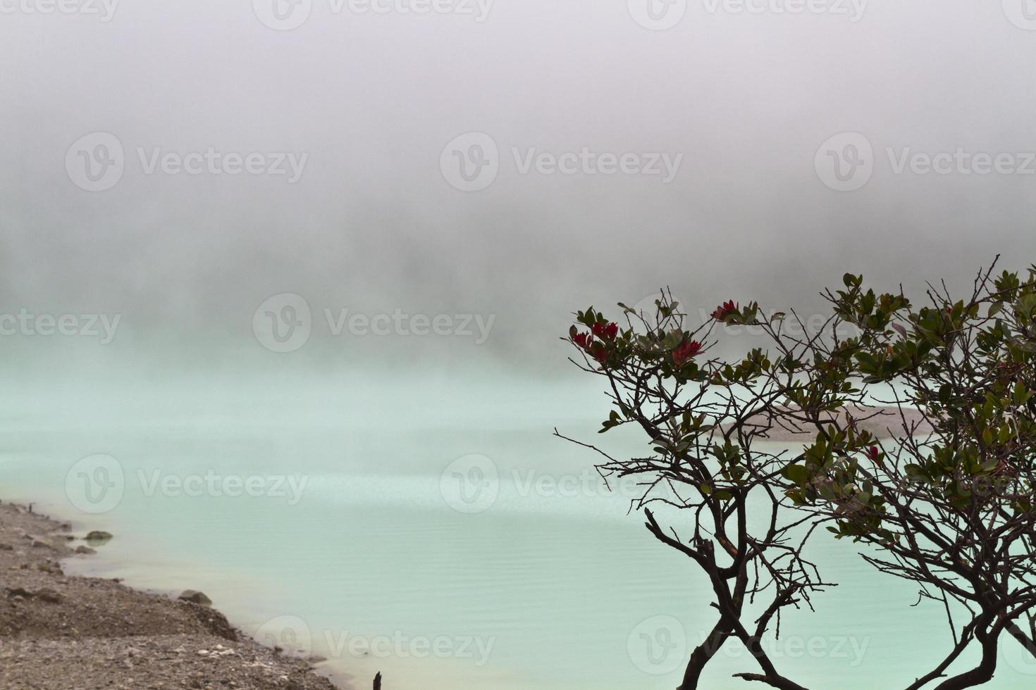 träd och dimmig sjö foto
