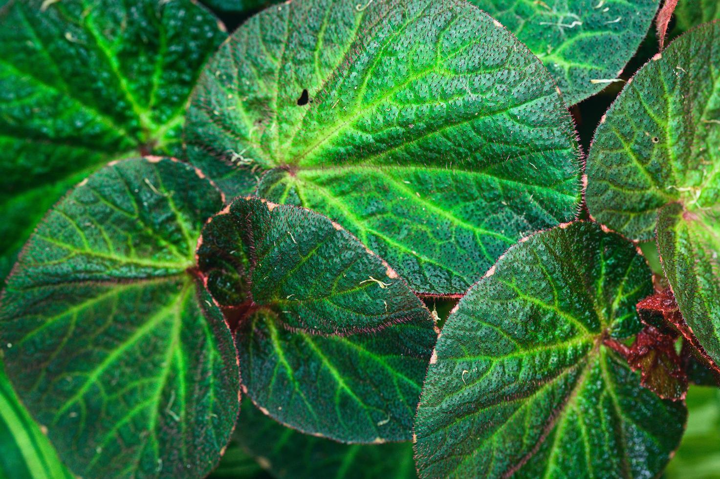 bakgrund gröna blad natur kärlek landskap foto