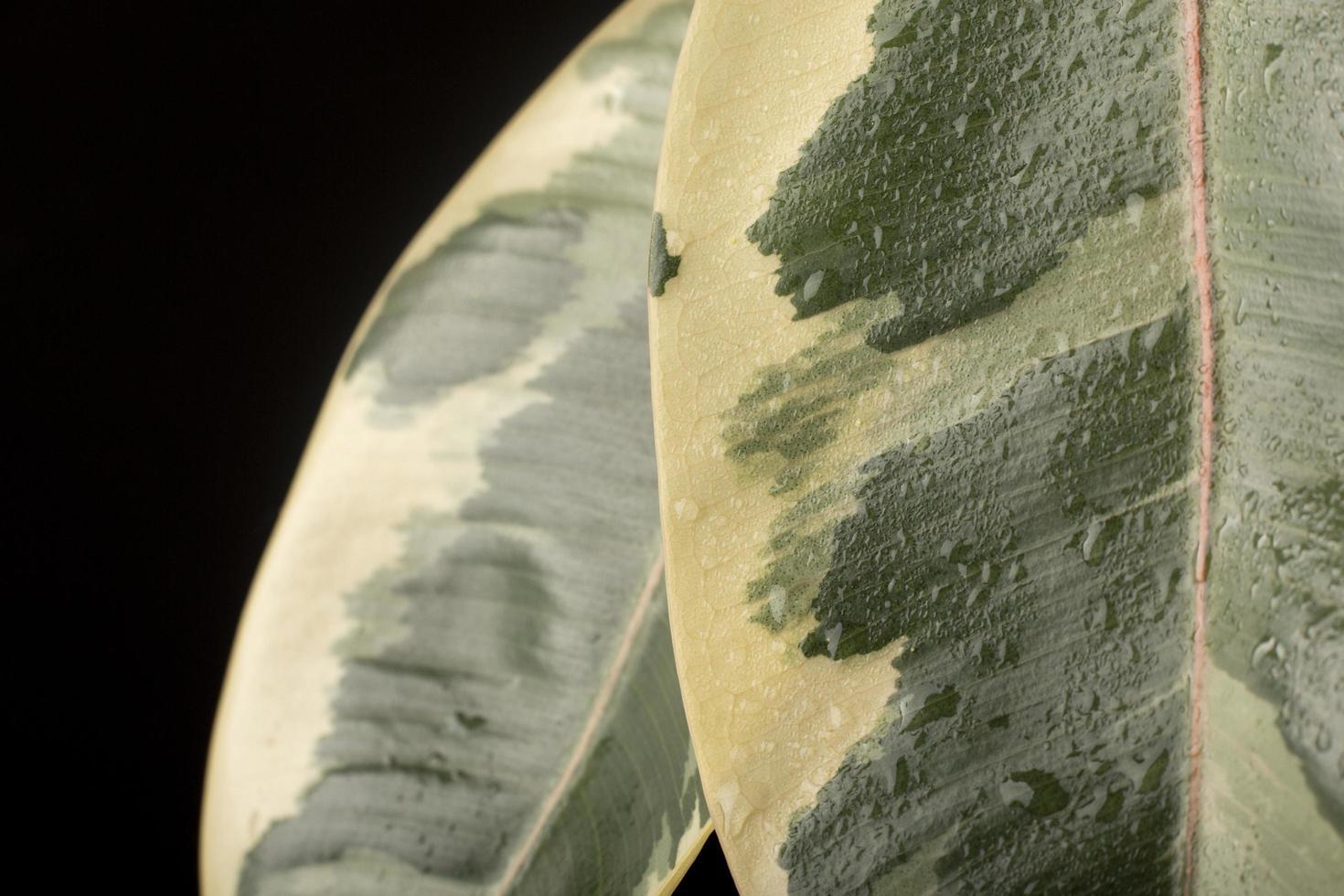inomhusväxtens texturer detaljer foto