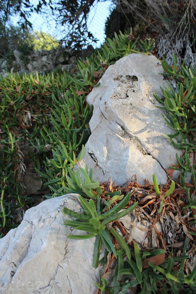 exotisk grön vegetation på vita stenar foto