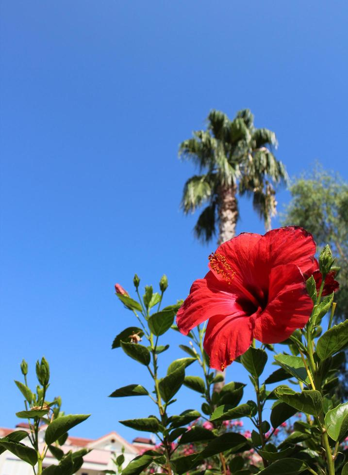 ljus exotisk röd blomma foto