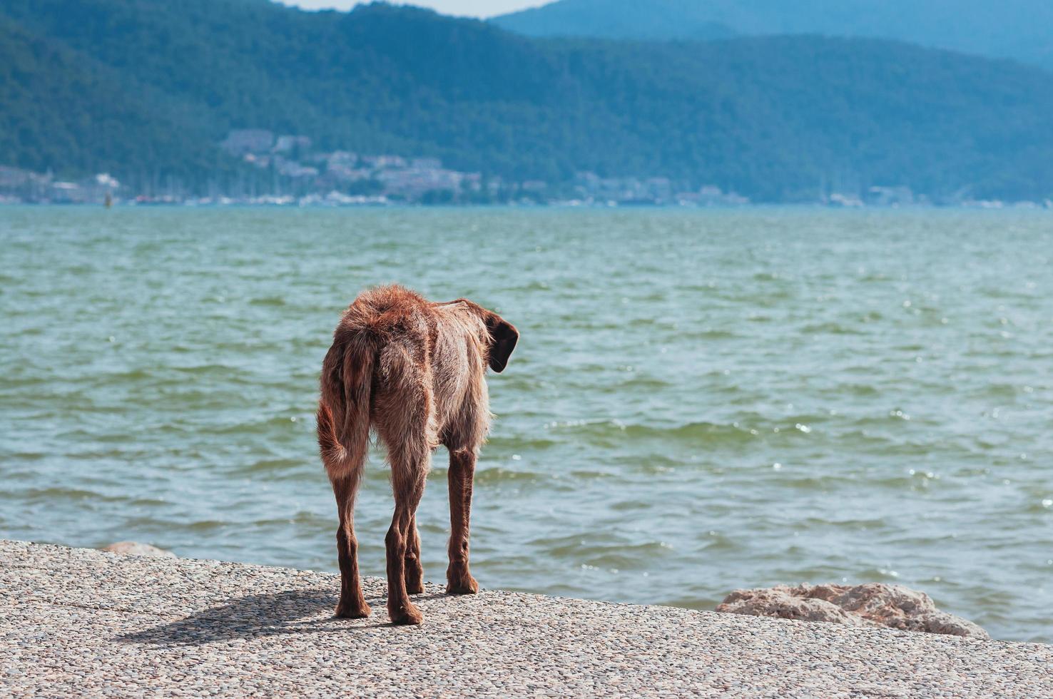 löshund som tittar på sommarhavet foto
