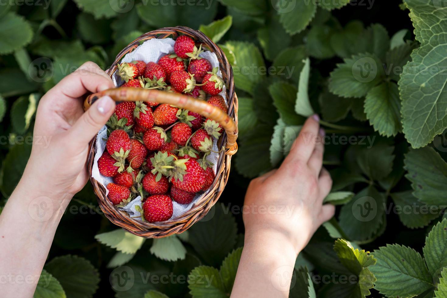 händer som håller fruktkorg foto