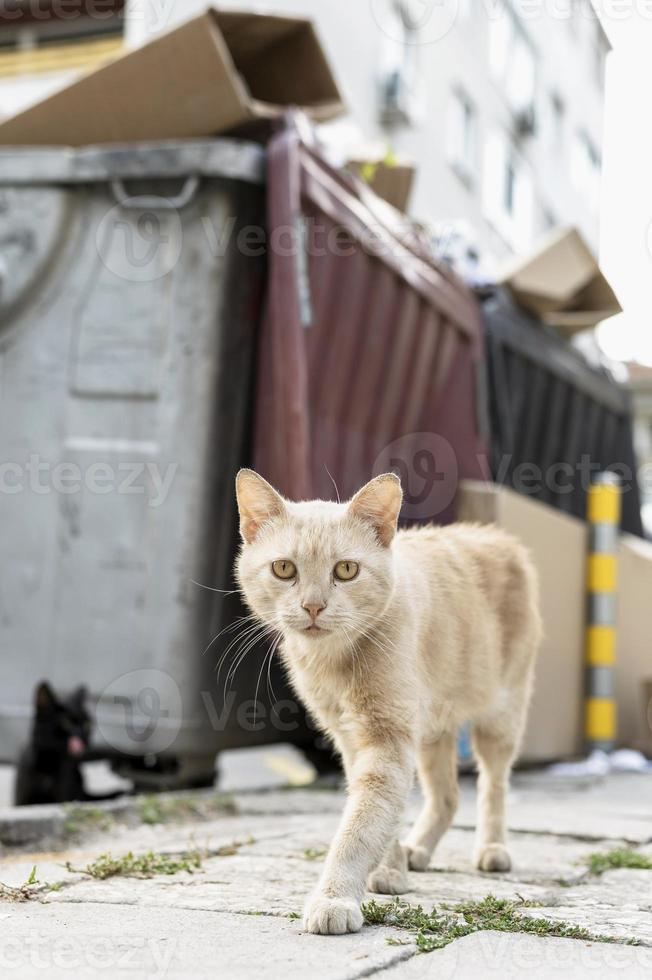 katt som går ner på gatan foto