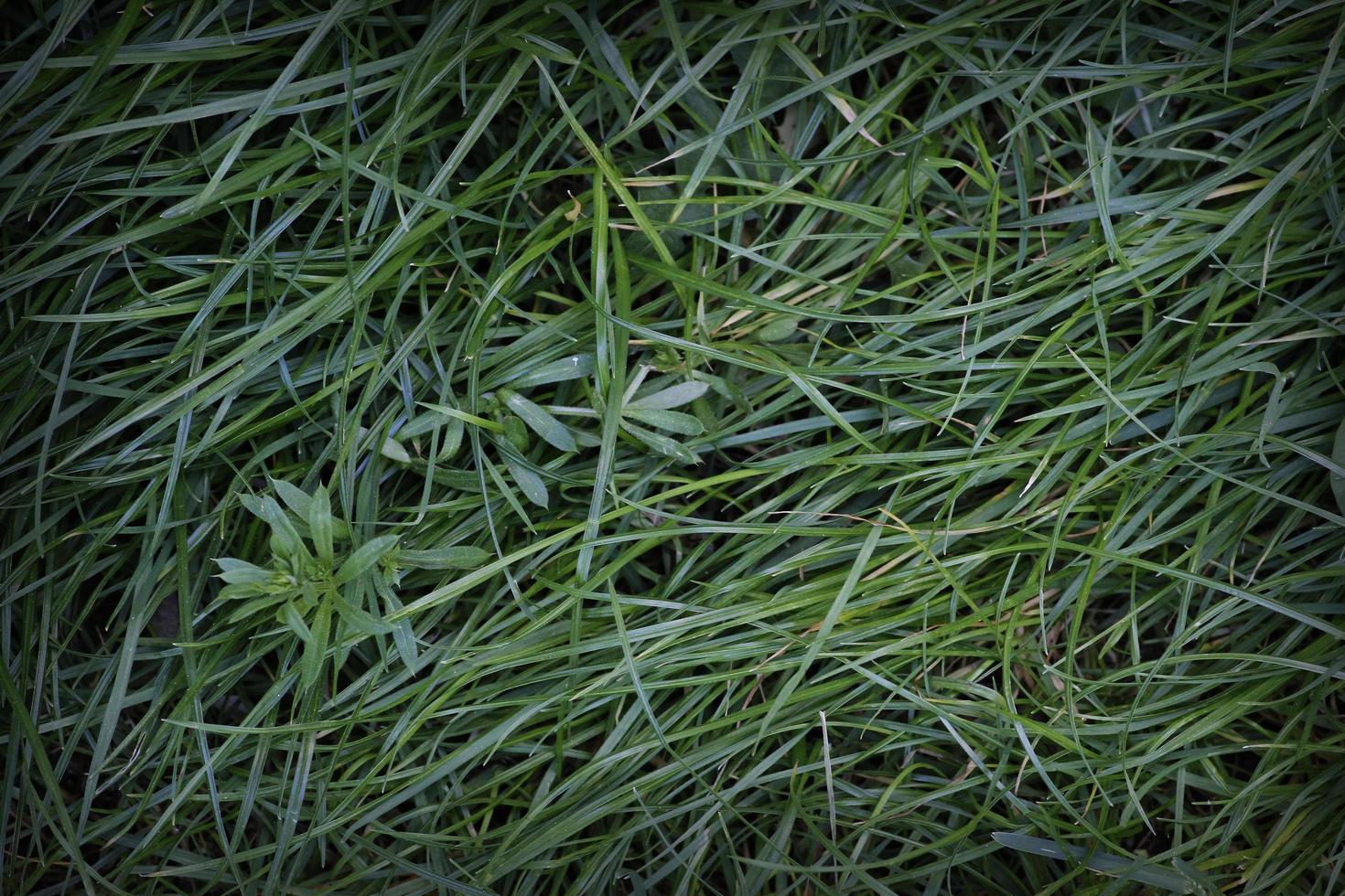 närbild fotografering av olika gröna gräs för grafiskt arbete foto